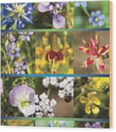 Spring Wildflowers II Wood Print
