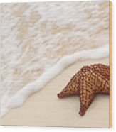 Starfish And Ocean Wave Wood Print by Elena Elisseeva