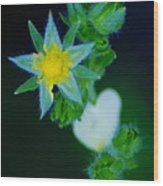 Starflower Wood Print