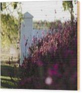 Cape Farm Courtyard  Wood Print