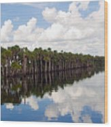 Stick Marsh In Fellsmere Florida Wood Print