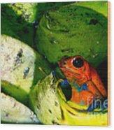 Strawberry Poison Dart Frog Wood Print