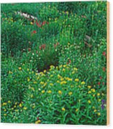 Stream And Alpine Flowers, Ouray Wood Print