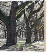 Strong Trees In The South Wood Print