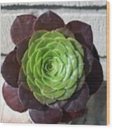 Succulent Rose Wood Print