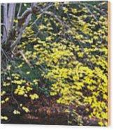Sugar Maple Birch River Wood Print