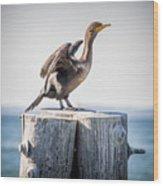 Sunbathing Cormorant Wood Print