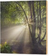 Sunbeam Wood Print