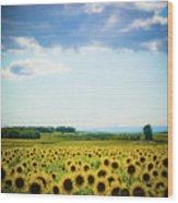 Sunflowers Wood Print by Kirstin Mckee