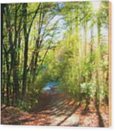 Sunny Autumn Path Wood Print
