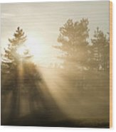 Sunrise Bursting Through Trees And Mist At Palsko Lake Wood Print