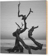 Sunrise On Driftwood In Black And White Wood Print