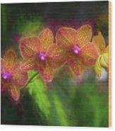 Sunset Doritaenopsis Orchid Wood Print