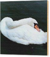 Swan At Rest  Wood Print