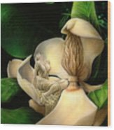 Sweet Smell Of Magnolia's Wood Print