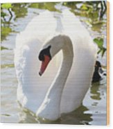 Sweet Swan 2 Wood Print
