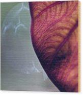 Taro Wood Print