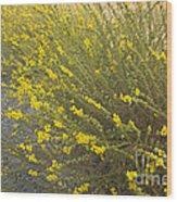 Tarweed Flowering Wood Print