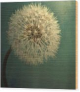 Teal Dandelion Wood Print