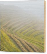 Terrace Fields Scenery In Autumn Wood Print