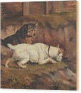 Terriers Ratting Wood Print