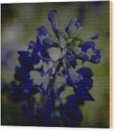 Texas Bluebonnet Wood Print