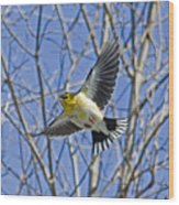 The American Goldfinch In-flight, Wood Print