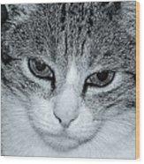 The Cat's Innocense Wood Print