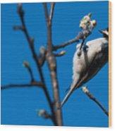 The Chickadee Wood Print