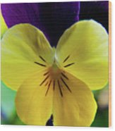 The Face Of A Pansy Wood Print