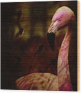 The Flamingo Wood Print