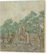 The Olive Orchard, 1889 Wood Print