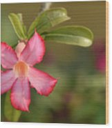 The Pink Wonder Wood Print