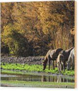 The Salt River Wild Horses  Wood Print