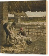 The Sheepshearing Wood Print