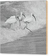 The Tide Of The Ibises Wood Print