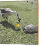 The Turtle And The Goose Wood Print