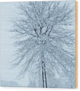 The Winter Tree  Wood Print by Lori Frisch
