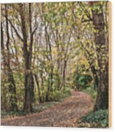 The Woods In Autumn Wood Print
