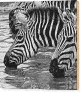 Thirsty Zebras Wood Print