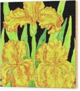 Three Yellow Irises, Painting Wood Print