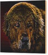 Tibetan Mastiff Wood Print