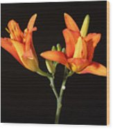 Tiger Lily Flower Opening Part Wood Print
