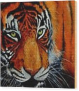 Tiger, Tiger Burning Bright... Wood Print