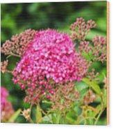 Tiny Pink Spirea Flowers Wood Print