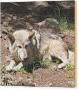 Tour Of Rocky Mountain Wildlife Foundation Wood Print