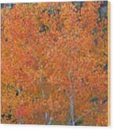 Translucent Aspen Orange Wood Print