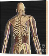 Transparent View Of Human Body Showing Wood Print