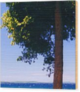 Tree By The Lake 3 Wood Print