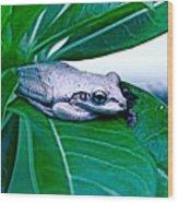 Tree Frog On Desert Rose  Wood Print